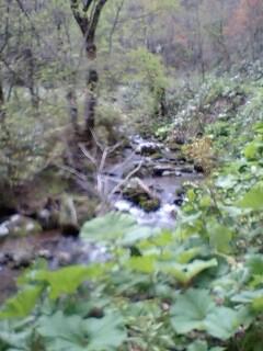 秘密の川…