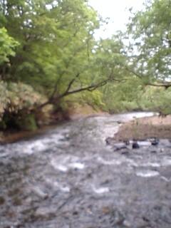 新緑の里川…