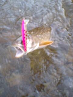 舐めるように釣る!