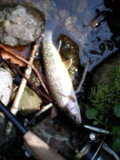 昨日の釣りの続き