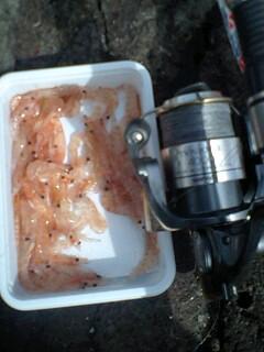 ホッケ釣りを堪能しました!