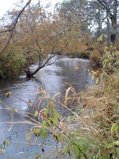 湿原特有のピート色