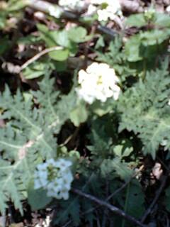 天然山葵…