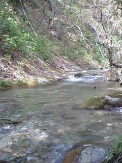 春はイワナの山岳渓流…