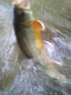 4目釣り…