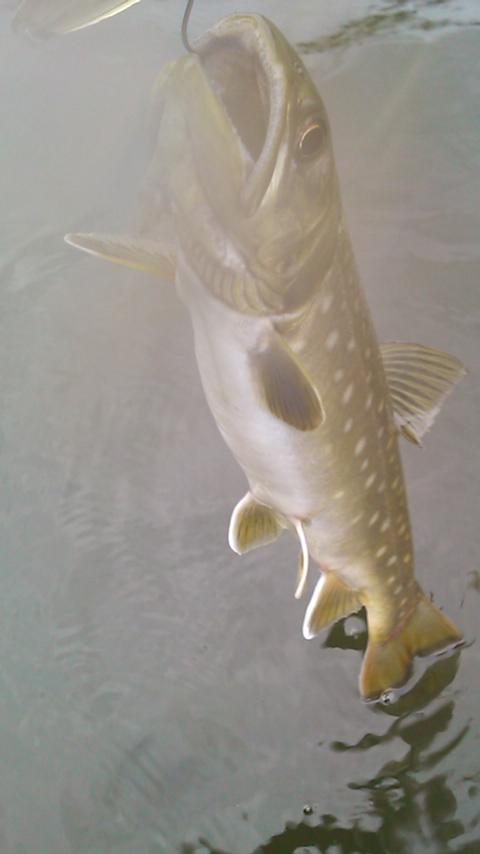 今日の釣り…