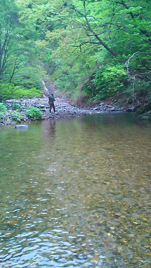 新緑の山岳渓流を遡る…