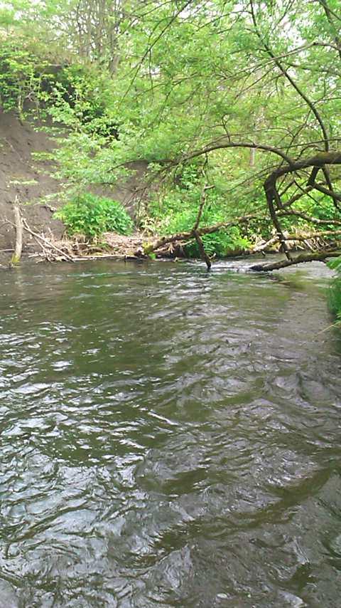 新緑の西別川…