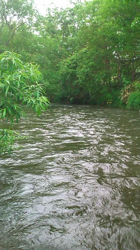 再び、西別川へ…