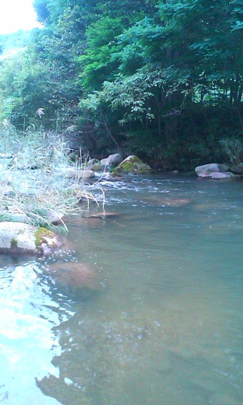 ニジマスの渓…