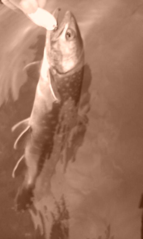 阿寒湖…尻駒