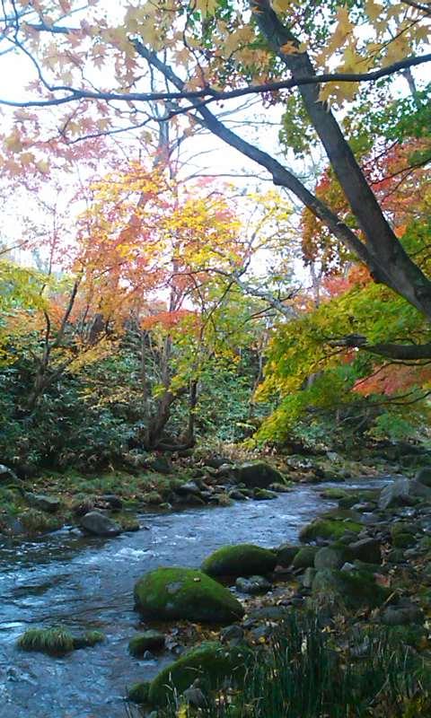 紅葉の渓にて…