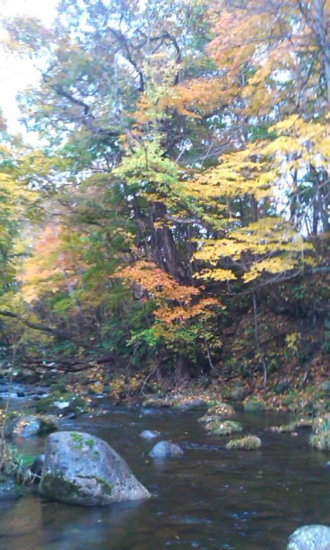 落葉の絨毯…