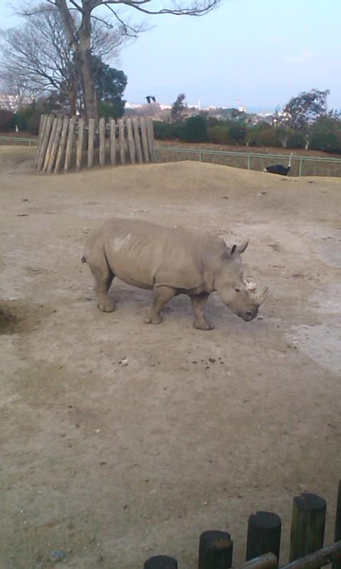 鹿児島平川動物公園…