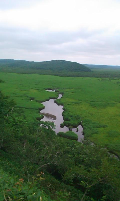 コッタロ湿原…