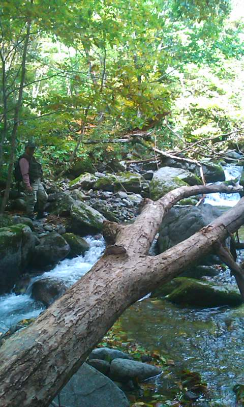 深山幽谷 山岳渓流の釣り…