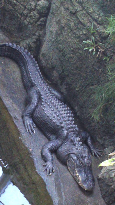 東山動植物園PART2…