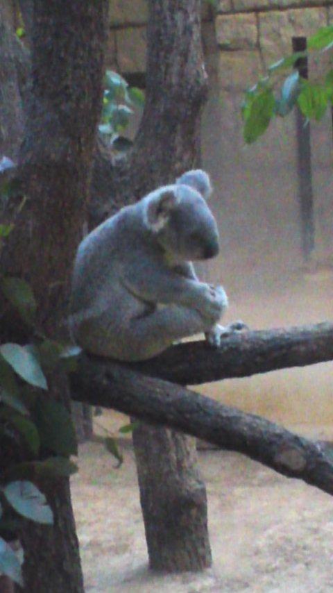 東山動植物園…