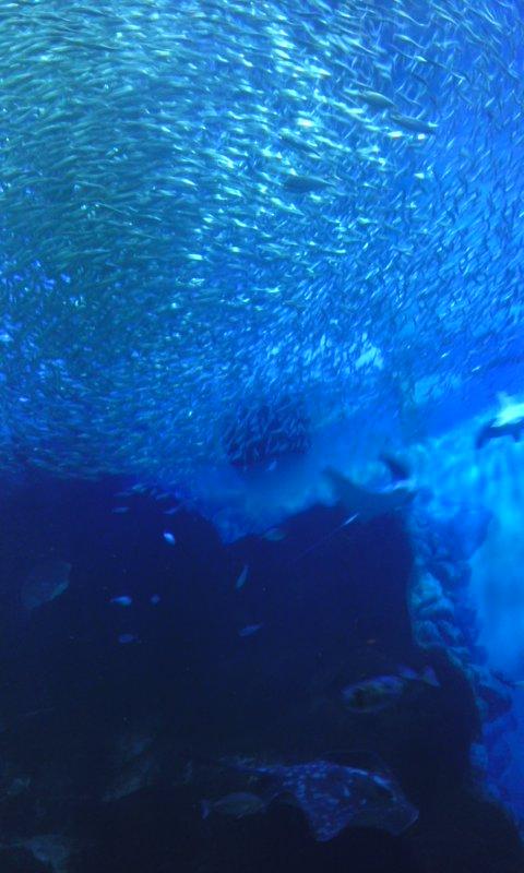 パノラマ大水槽…