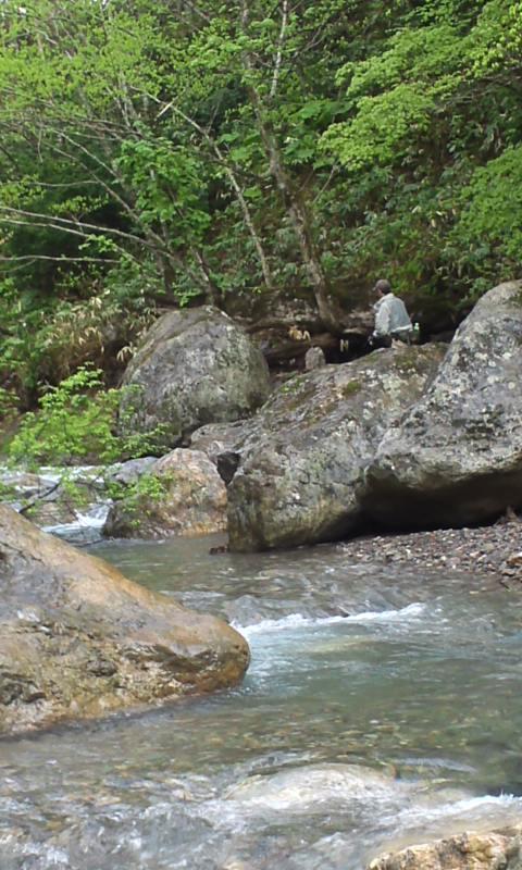 新緑の山岳渓流…