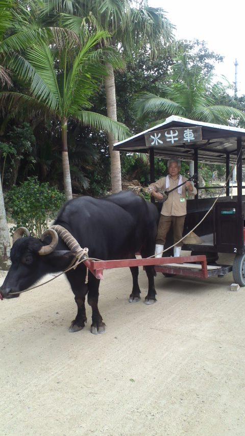 竹富島…水牛車…
