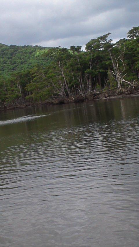 西表島…仲間川マングローブクルーズ…