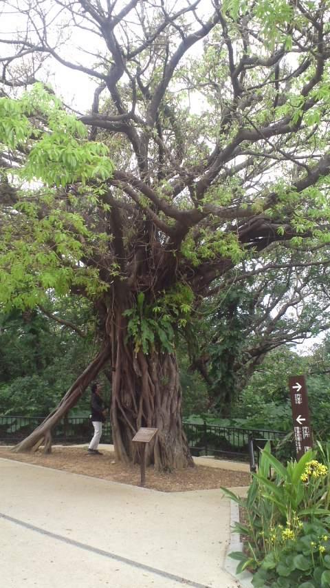 首里城公園…