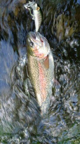 西別川釣に行って来ました・・2日目