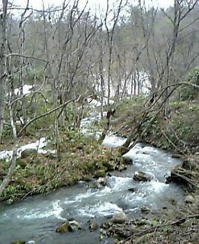 黒松内秘密の川へ