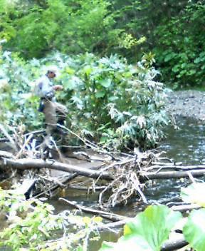 午後から小さい川へ